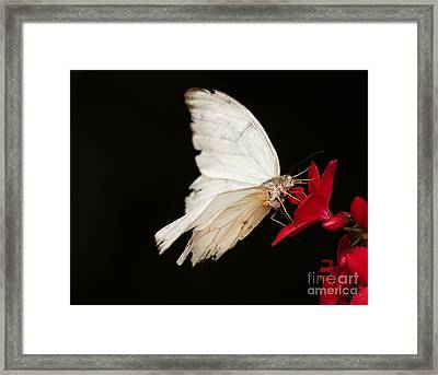 Tattered And Beautiful Framed Print