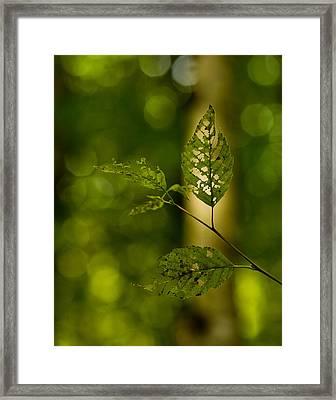 Tattered Leaves Framed Print