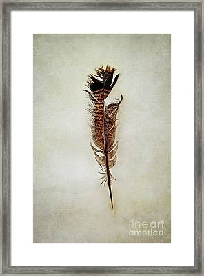 Framed Print featuring the photograph Tattered Turkey Feather by Stephanie Frey