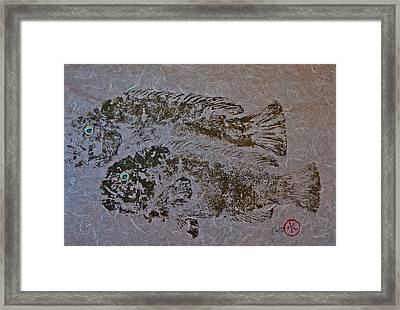 Tautog With Shadow Framed Print by Jeffrey Canha