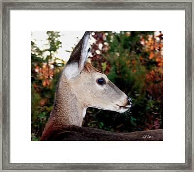 Tav Framed Print by Bill Stephens