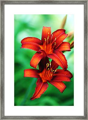 Tawny Beauty Framed Print by Debbie Oppermann