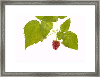 Tayberry Framed Print by Andy Smy