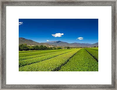 Tea In The Valley Framed Print by Mark Lucey