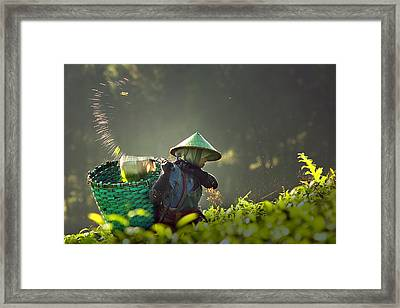 Tea Pickers Framed Print by Muhammad Raju