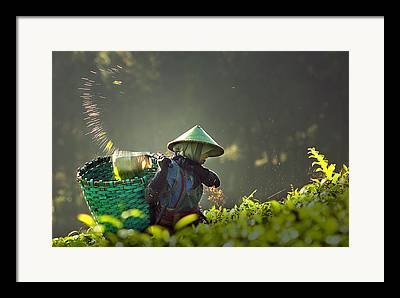 Picker Photographs Framed Prints