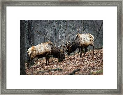 Framed Print featuring the photograph Teaching by Andrea Silies