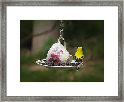 Teacup Finch Framed Print