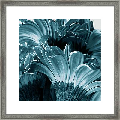 Teal Gerberas Framed Print by Tony Grider