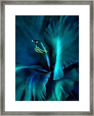 Teal Gladiola Flower Framed Print by Jennie Marie Schell