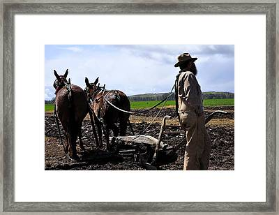 Team Of Three Framed Print