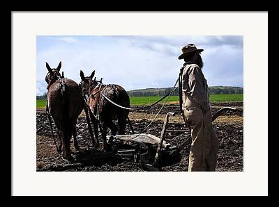 Team Or Horses Photographs Framed Prints
