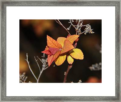 Tear Framed Print by Sergey and Svetlana Nassyrov