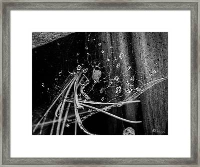 Tears Of A Spider Framed Print by Anthony Sama