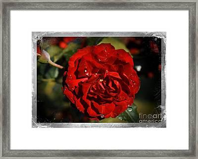 Tears Over Beauty Framed Print