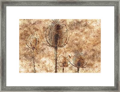 Framed Print featuring the photograph Teasel Heads  by Dariusz Gudowicz