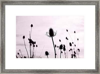 Teasels In A French Field  II Framed Print by Gareth Davies