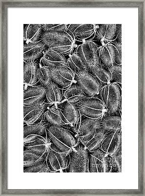 Teasels Framed Print by Tim Gainey