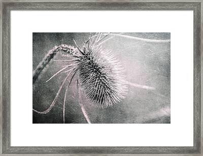 Teazel Weed Framed Print by Tom Mc Nemar