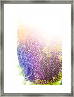 Framed Print featuring the photograph Technicolor Sunflower by Christi Kraft