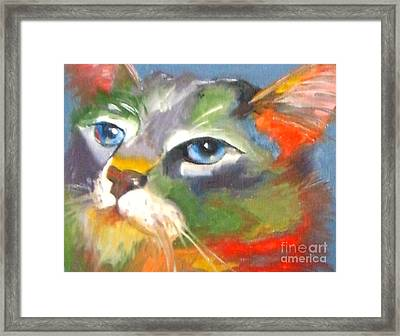 Technicolor Tabby Framed Print by Susan A Becker