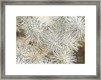 Teddy Bear Cholla Framed Print by Linda Parker