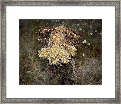 Teddy Bear Framed Print