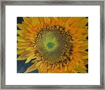 Teddy Bear Sunflower Framed Print by Amelia Emery