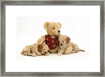 Teddy Bear With Puppies Framed Print by Jane Burton