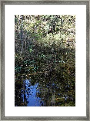 Teeming With Life Framed Print by Suzanne Gaff