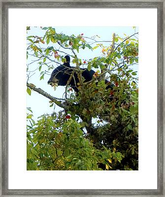 Teenage Bear Framed Print by Terry Anderson