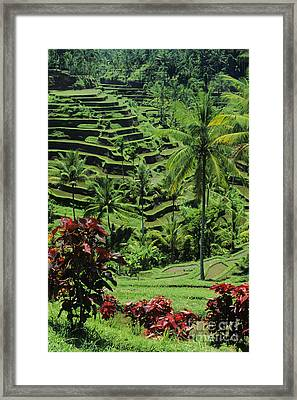 Tegalalang, Bali Framed Print by William Waterfall - Printscapes