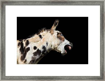 Framed Print featuring the photograph Tell It Like It Is by Sharon Jones