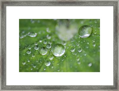 Tell Me The Future . . . Framed Print by Claudia Kukulka
