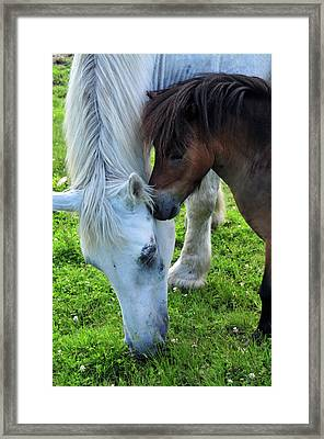 Telling Secrets Framed Print by Mike Martin