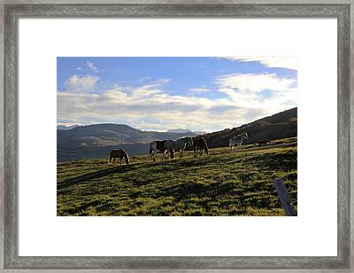 Telluride Mountain Herd Framed Print