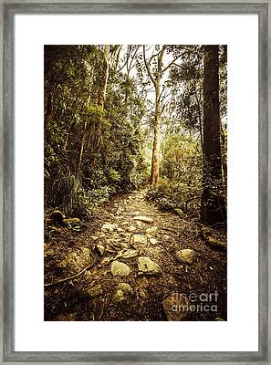 Temperate Mountain Trail Framed Print