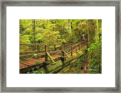 Temperate Rainforest Bridge Framed Print by Adam Jewell