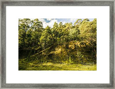 Temperate Rainforest Scene Framed Print