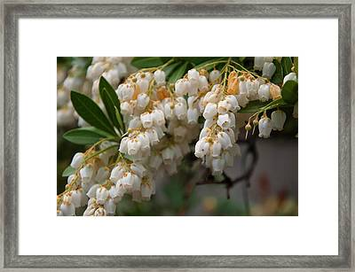 Framed Print featuring the photograph Temple Bells Andromedia by Chris Flees