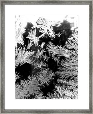 Temporal Treasures Framed Print by Polly Castor