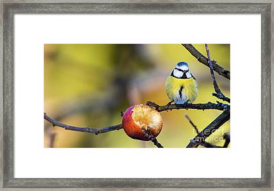 Framed Print featuring the photograph Tempting by Torbjorn Swenelius