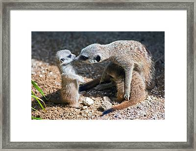 Tender Care Framed Print by Bill  Robinson