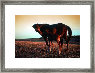Tender Moment Framed Print by Jim Sauchyn