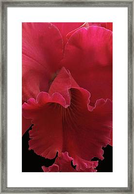 Tender Orchid Framed Print