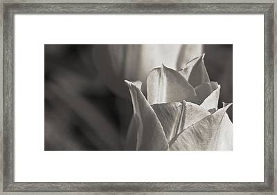 Tender Framed Print by Prairie Pics Photography