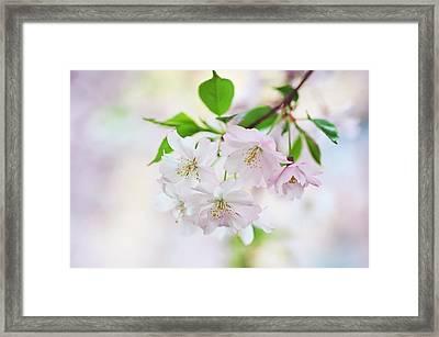 Tender Spring Framed Print by Jenny Rainbow