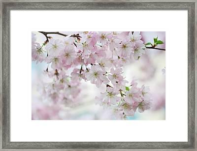 Tender Spring Pastels Framed Print by Jenny Rainbow
