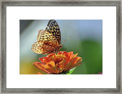 Framed Print featuring the photograph Tenderness by Glenn Gordon