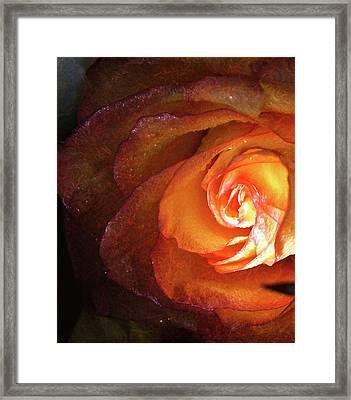 Tenderness Framed Print by Monroe Snook